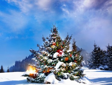 christmas_trees_decorated_outside-wallpaper-1366x768-red